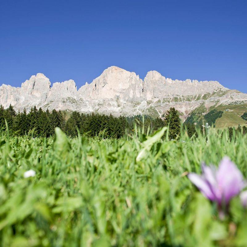Sommer in Obereggen