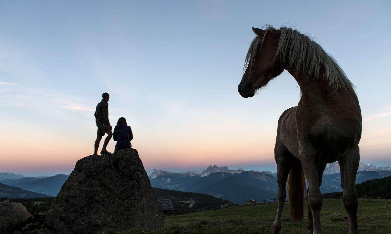 Ab in den Sattel beim Reiturlaub in Südtirol